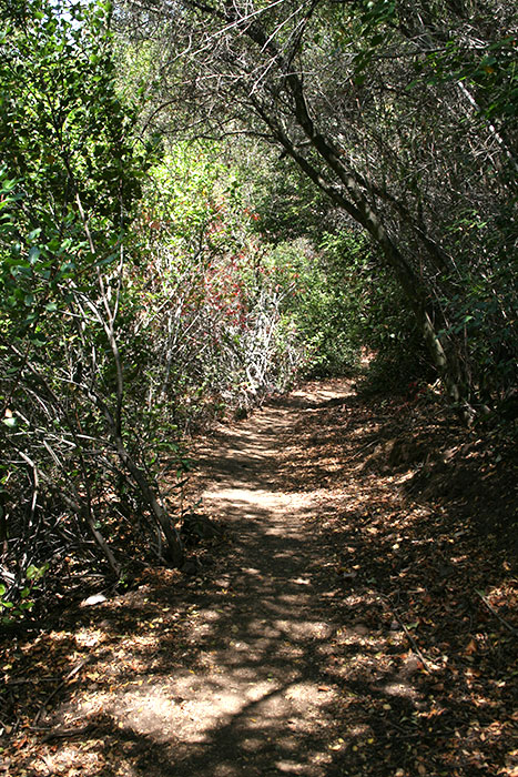 Hondo Canyon Shaded Trail