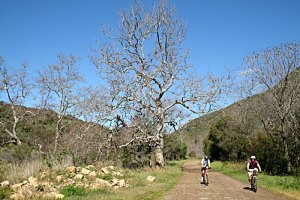 sycamore canyon trail