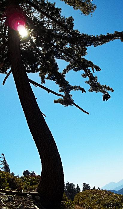 ontario peak tree in lens flare
