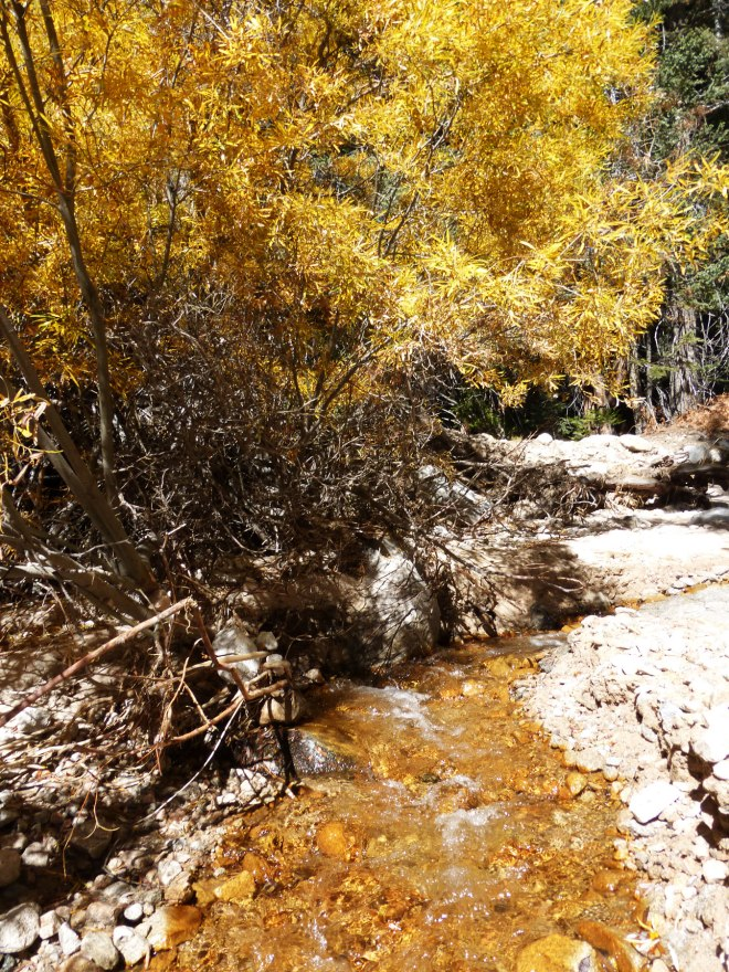 Yellow Stream and Autumn Colors