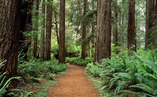 hoh_rainforest_hike_2