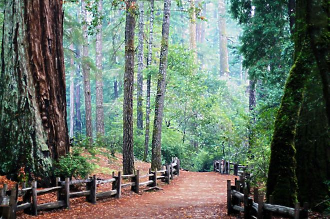 big_basin_state_park_trail