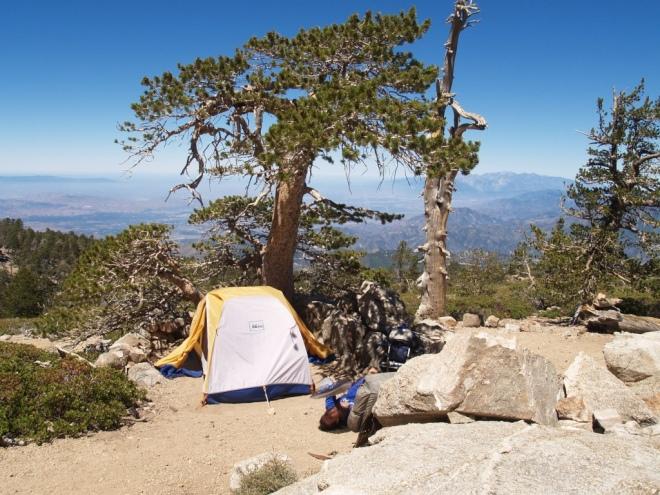 limber_pine_bench_camp