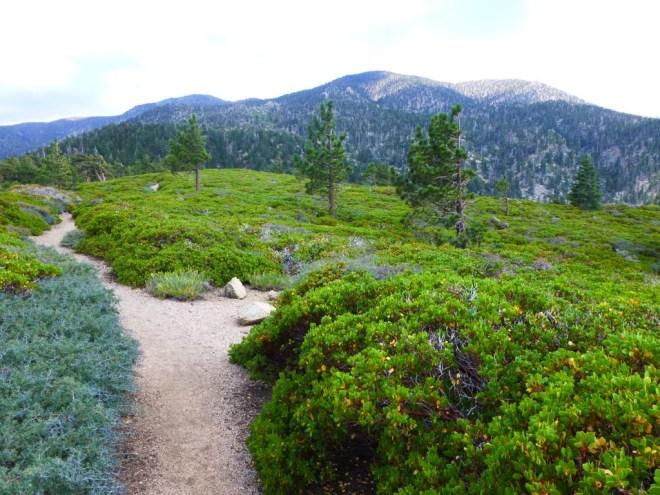 limber_pine_hike1